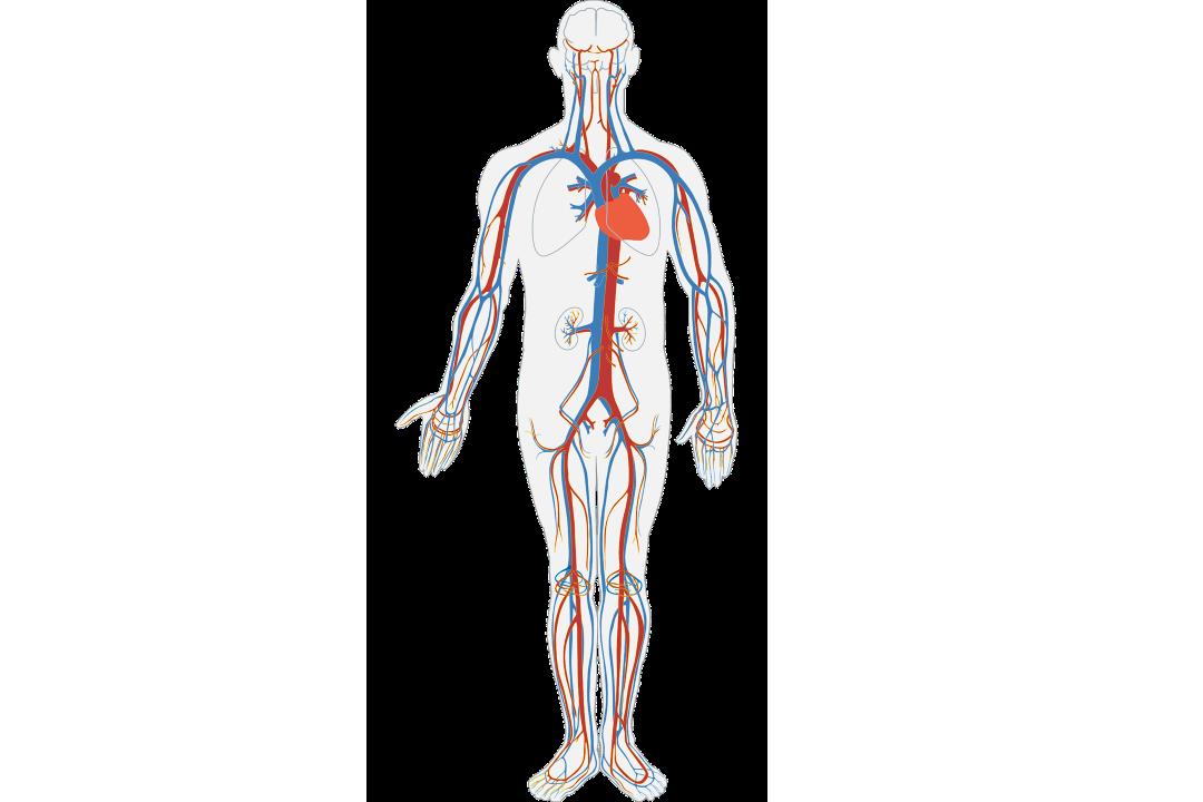 Tips To Improve Blood Circulation Mtatva Health Pie