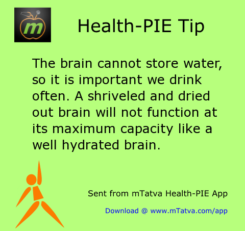 hydration,brain