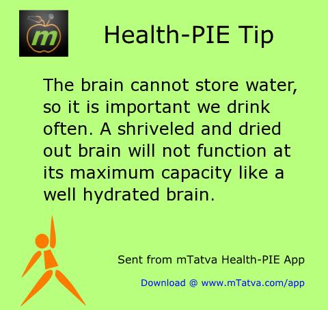 hydration,brain