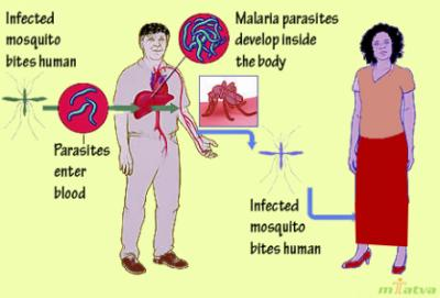 Spread of malaria